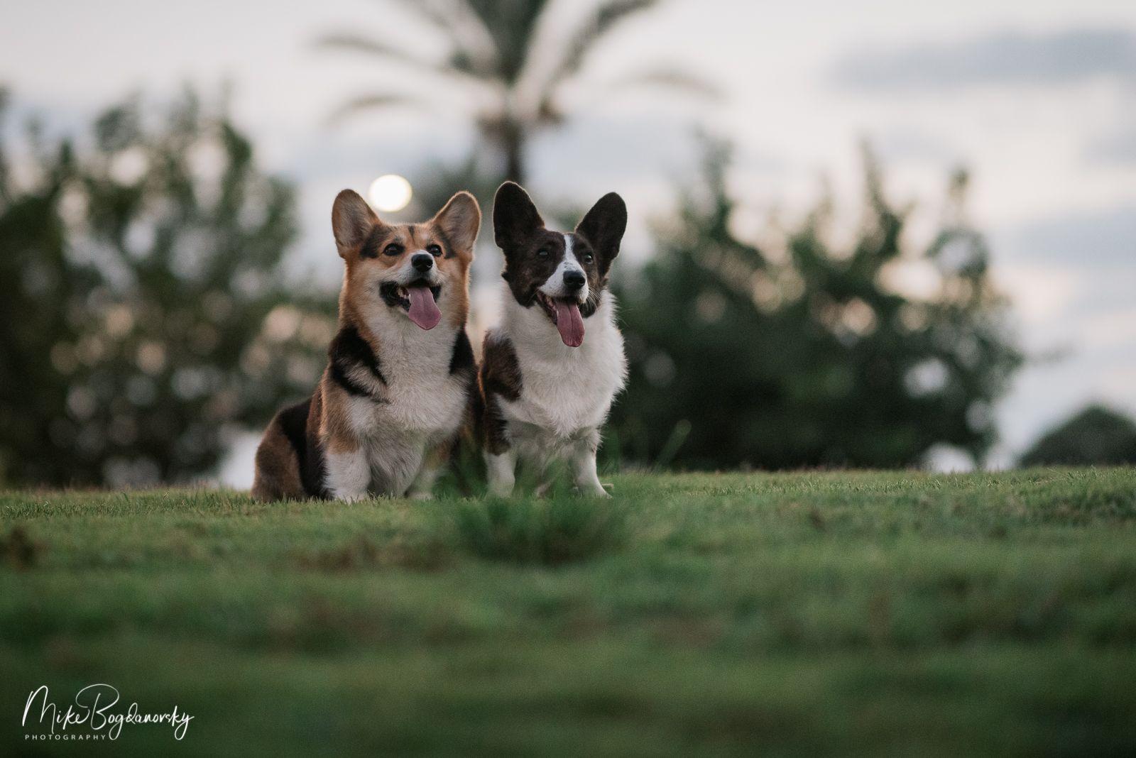 Скидки на еду для собак из нашего питомника